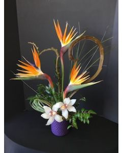Orchids and Birds of Paradise