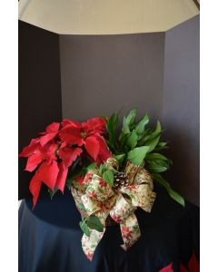 Poinsettia Plant with Green Plant