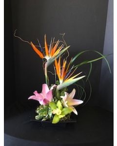 Tropical Flowers of Artistry